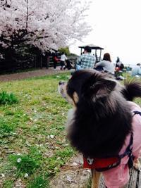 リオンさんとお花見 - ケンちゃんの日・英・中・韓ブログ