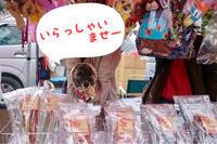 MURAFes - 琉球犬mix白トゥラーのピカ