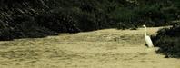 春浅き水を渡るや鷺一つ - 高知・(有)山陽工務店の仕事