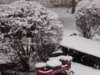 雪に軍配 - 標高1,100メートルの悦楽