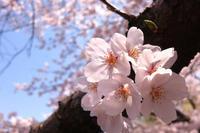 春の元気は『肝』の養生から - 漢方杏鈴堂のブログ 東京都町田市玉川学園前
