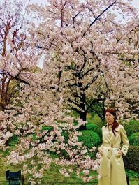 桜雨の東寺でお花見🎶 - 八巻多鶴子が贈る 華麗なるジュエリー・デイズ
