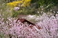 一躍の春:2:三年目の楽園 - walk with my Camera
