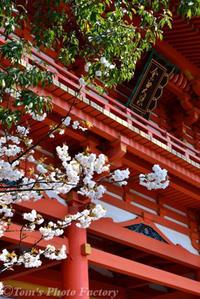京を歩く~桜色の京都「今宮神社」あぶり餅 - Tomの一人旅~気のむくまま、足のむくまま~