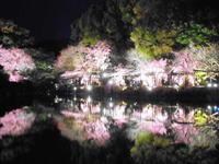 京都市 平安神宮紅しだれコンサート2017♪ 東神苑編 - 転勤日記