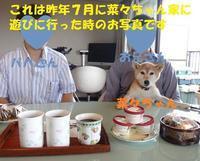 菜々ちゃんに時間をください・・・ - もももの部屋(怖がりで攻撃性の高い秋田犬のタイガ、老犬雑種のベスの共同生活&保護活動の記録です・・・時々お空のモカも登場!)
