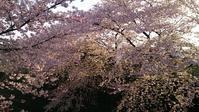花見日和 - そばやの娘の話