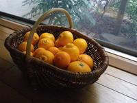 旬の柑橘お楽しみ箱4/13 - つくしんぼ日記 ~徒然編~