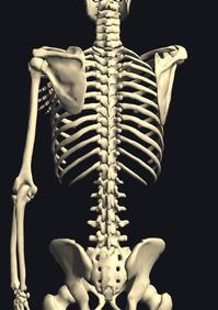 デスクワーク肩凝りの方へ(理論)bonefit™ストレッチ - つまだ通信ブログ