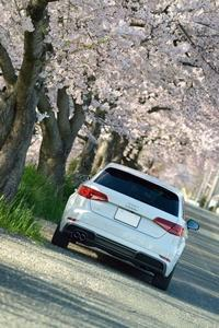 A3と桜 - The Digital Photo Stage ~ LEXUS RC & Audi A3の備忘録と時々...工場萌えとDr.Yellow ~