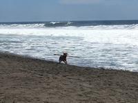 潮の香りと、シーフード - 悠悠生活 in Mexico