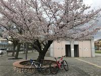 お花見ランチポタ(有馬温泉) - 宝塚マドン
