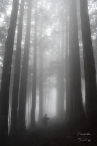 In the Mists 2 - Sauntering
