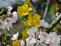 鬱金香呉服店へおこしやす * Bienvenue à Kimono Atelier Tulipe ! - ももさへづり*うた暦*Cent Chants d' une Chouette