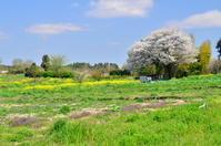 桜巡り④ - つれづれ日記