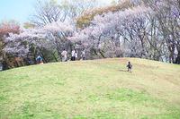 まだまだお花見・くじら山とか 2017年4月12日 - 暗 箱 夜 話 【弐 號】