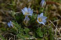 南高尾方面の花 - 野の花山の花ウォッチング in 奥多摩