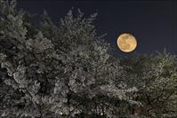 月夜の桜 - * 写ing!Ⅱ *