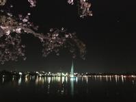 水戸千波湖の夜桜 - 変わりゆく温度