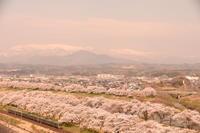 東北遠征(千本桜) - 鉄ちゃん再開しました