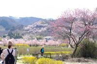 里山の春ガーデン*花見山 - PhotoWalker*