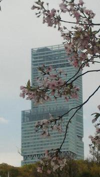 ■雨上がりの桜■ - ちょこっと陶芸