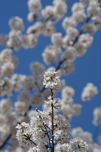 犬山の春 その6 - 在り合ふ瞬間(ありあうとき)