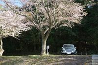 湯の児の桜 - 絵で見るカメラ + plus