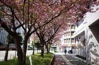 花咲く街角 170416 #2 - LOOSE