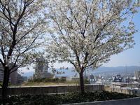 観桜ご近所ドライブツアー(5) ~都会の桜西宮ガーデンズの桜~ - 大屋地爵士のJAZZYな生活