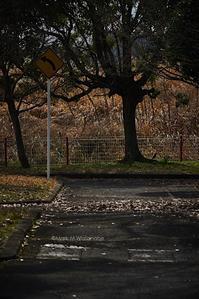 近所の廃自動車教習所跡 - Mark.M.Watanabeの熊本撮影紀行