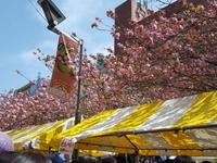 「はじめ」のお父さんが元気になった桜新町・桜まつり&トランプよ歴史に学べ - 梟通信~ホンの戯言