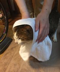 ビショチコの帰還 - COMPLEX CAT