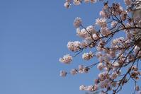 #3015 日和山公園-お花見日和 (1) - 14番目の月