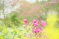 原谷苑のお花達〜ツツジ〜 - *PHOTOMOMIN*