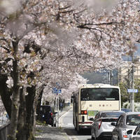 {Instagram} 『哲学の道・南禅寺・丸山公園』:京都桜紀行 2017④ - IkukoDays