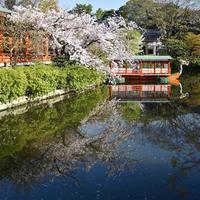 {Instagram} 『神泉苑・平野神社・竹中稲荷神社』:京都桜紀行 2017① - IkukoDays