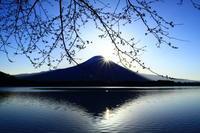 29年4月の富士(18) 田貫湖の富士その2 - 富士への散歩道 ~撮影記~