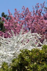 月と桜と私の心 - お花畑で微笑んで**