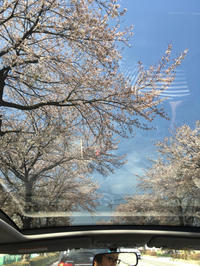 次は芽吹きの季節 - か ん ば ら 日 記