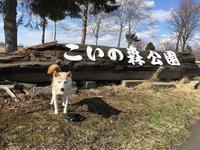 《さくらの冒険》浦臼・いこいの森→奈井江・にわ山 - 柴犬さくら、北国に生きる