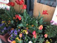 ⭐︎春の嵐の翌朝 - 街かど 「花」 スポット