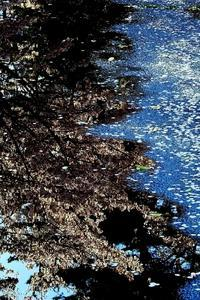 川の流れのように - 写心食堂