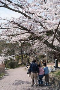 #3021 日和山公園-お花見日和 (7) - 14番目の月