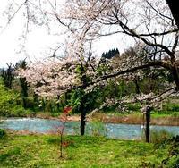 真っ赤な新芽とピンクのお花 - 金沢犀川温泉 川端の湯宿「滝亭」BLOG