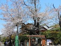 北鎌倉香下庵茶屋でおやつブレイク - ラベンダー色のカフェ time