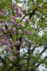 春の嵐に耐えて - 彩りの軌跡