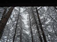 """今年の冬は""""しぶとい""""ですね!また吹雪で積雪15センチ。 - 十勝・中札内村「森の中の日記」~café&宿カンタベリー~"""