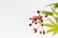 春の日和田山 - デジカメ写真集