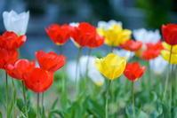 春の色ってこんな色 - 幸せな写真時間